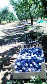 Voćnjak - 400 stabala šljive (67 ari)
