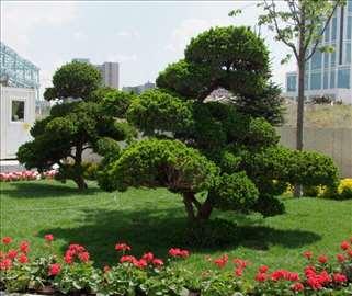 Uređenje vrta, bašte, dvorišta... (Usluge)