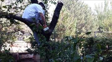 Sečenje drveća, košenje trave