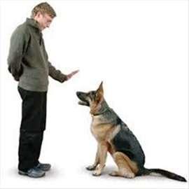 Obuka službenih pasa