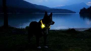 Svetleća led ogrlica za psa