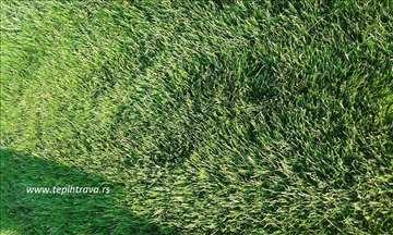 Gajena tepih trava