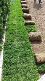 Tepih trava-travnjak za 1 dan