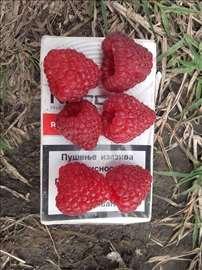 Prodaja sadnica maline polane i polke, Ratkovo