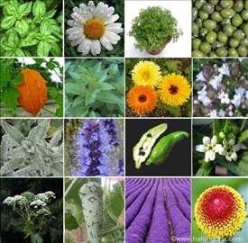 Lekovito i začinsko bilje