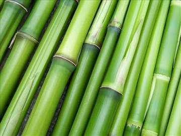 Bambus sadnice prodajem