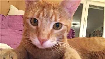 Nestao narandžasti mačak na području Mirijeva