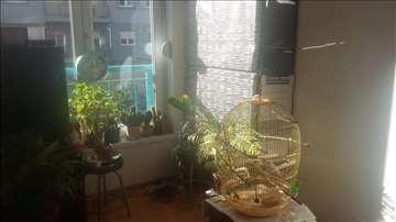 Trosoban stan u Stepi extra lokacija