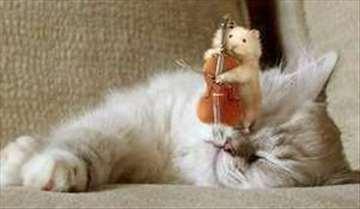 Časovi violončela