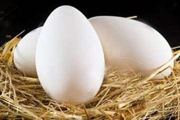 Prodajem osemenjena guščija jaja