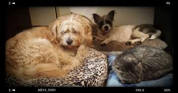 Čuvanje pasa jako povoljno