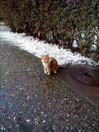 Trobojna maca traži dom