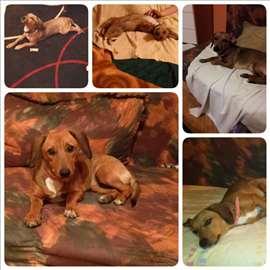 Nestao pas u Obrenovcu