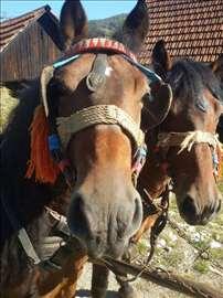 Prodajem konje sa amovima!
