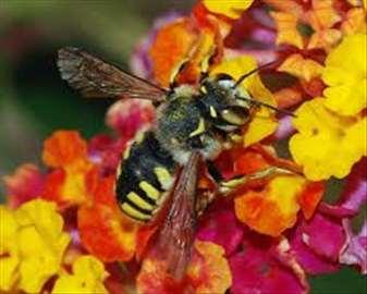 Pčele na prodaju