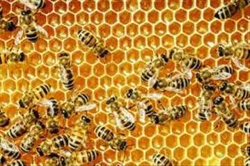 Prodajem pčelinja društva na LM ramovima
