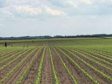 Usluge u poljoprivredi