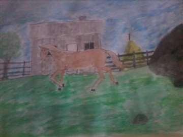 konj i baraka