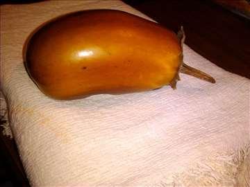 Žuti platlidžan organsko seme