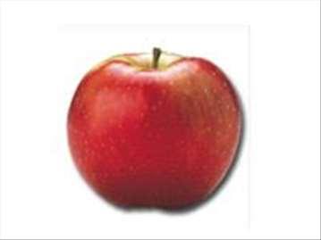 Ajdared jabuka, sadnice