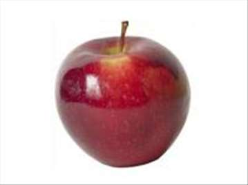 Gloster jabuka, sadnice