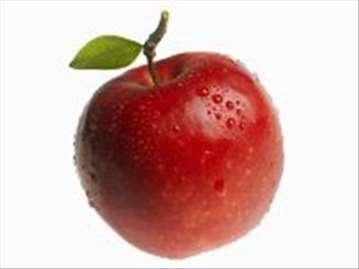 Jonagold jabuka, sadnice