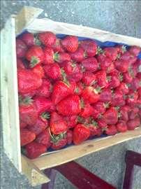 Prodajem sadnice jagoda, 4-5 din