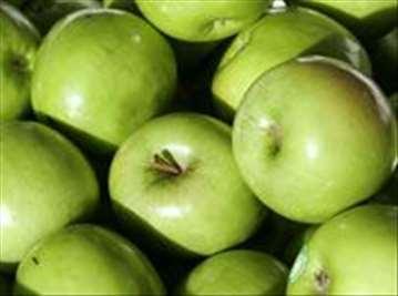 Voćne sadnice jabuke Greni Smit