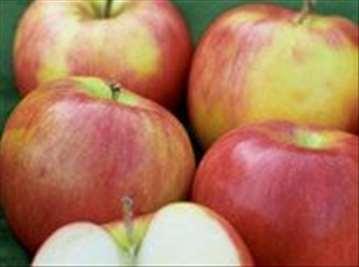 Voćne sadnice jabuke Jonagold