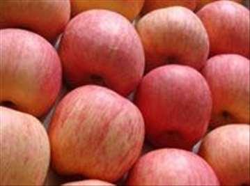 Voćne sadnice jabuke sorte Fudži