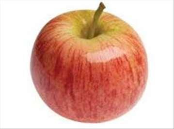 Voćne sadnice jabuke sorte Gala