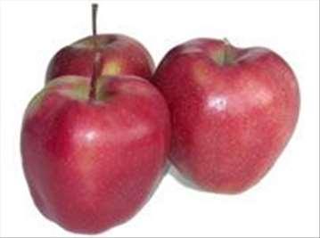 Voćne sadnice jabuke sorte Gloster