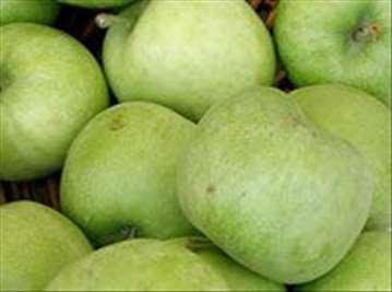 Voćne sadnice jabuke sorte Mucu