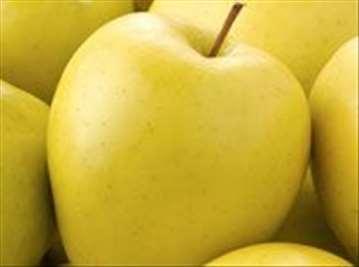 Voćne sadnice jabuke Zlatni delišes