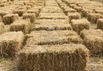 Pšenicna balirana slama