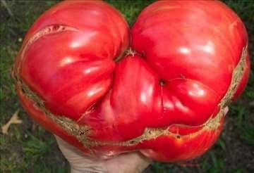Paradajz Omar`s Lebanese-plodovi do 1kg, domaće