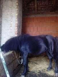Poni konj