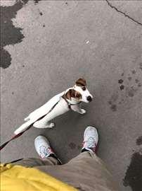 Traži se pas