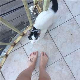 Mlada mačka traži dom, hitno.