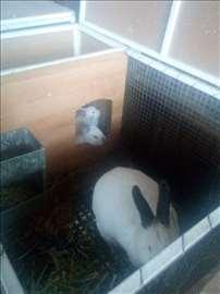 Zečevi kunići