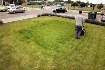 Košenje trave. Beograd
