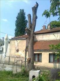 Prodajem drvo oraha