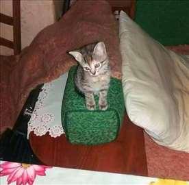 Malena tigrica na poklon :)