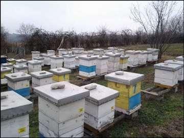 Pčelinja društva i rojevi