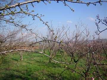 Grocka - Prodajem plac / voćnjak, površine 45 a