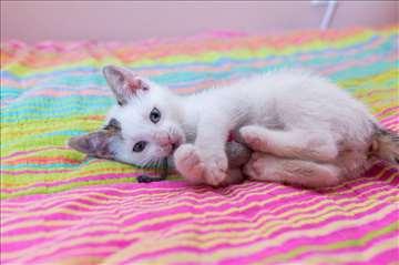 Mačak Oto traži dom