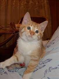 Maleni žuto-beli mačorčić na poklon