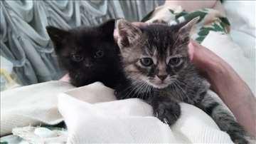 Mali mačići na poklon