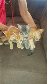 Mali macici bate i seke na poklon