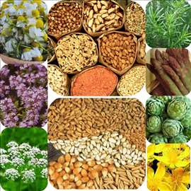 Semena zacinskog bilja(besplatna dostava)